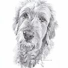 wolfhound portrait drawing by Mike Theuer