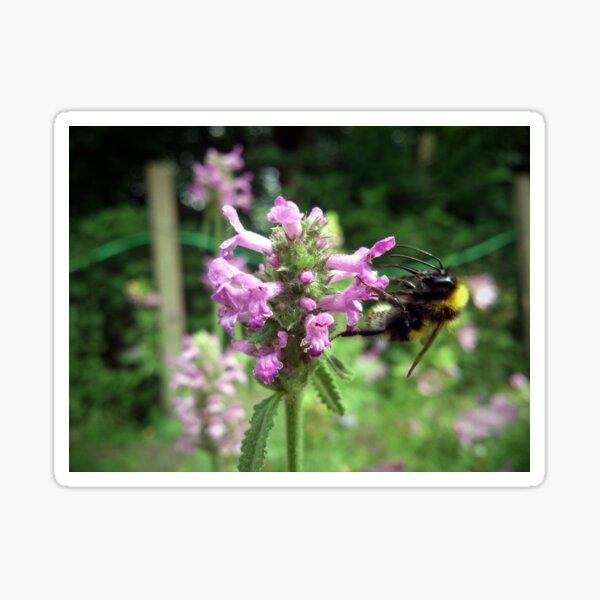 Blüte mit Biene Sticker