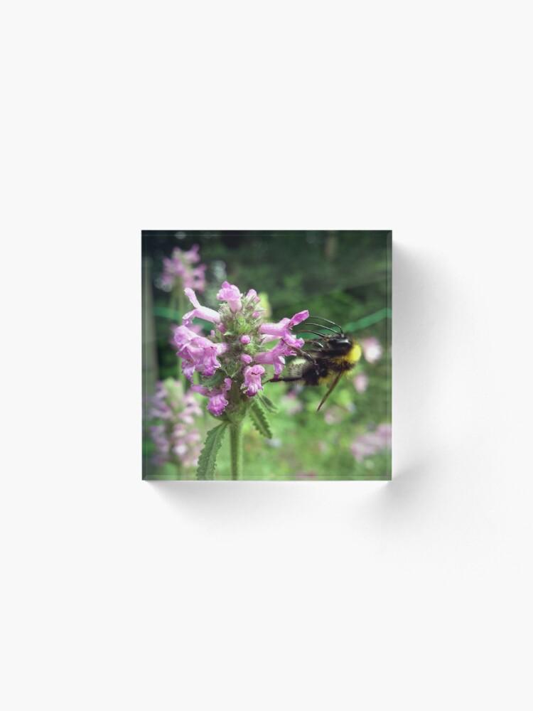 Alternative Ansicht von Blüte mit Biene Acrylblock