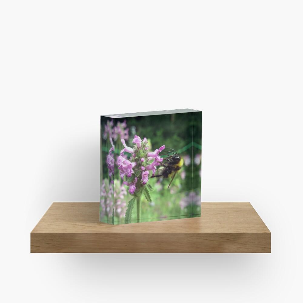 Blüte mit Biene Acrylblock