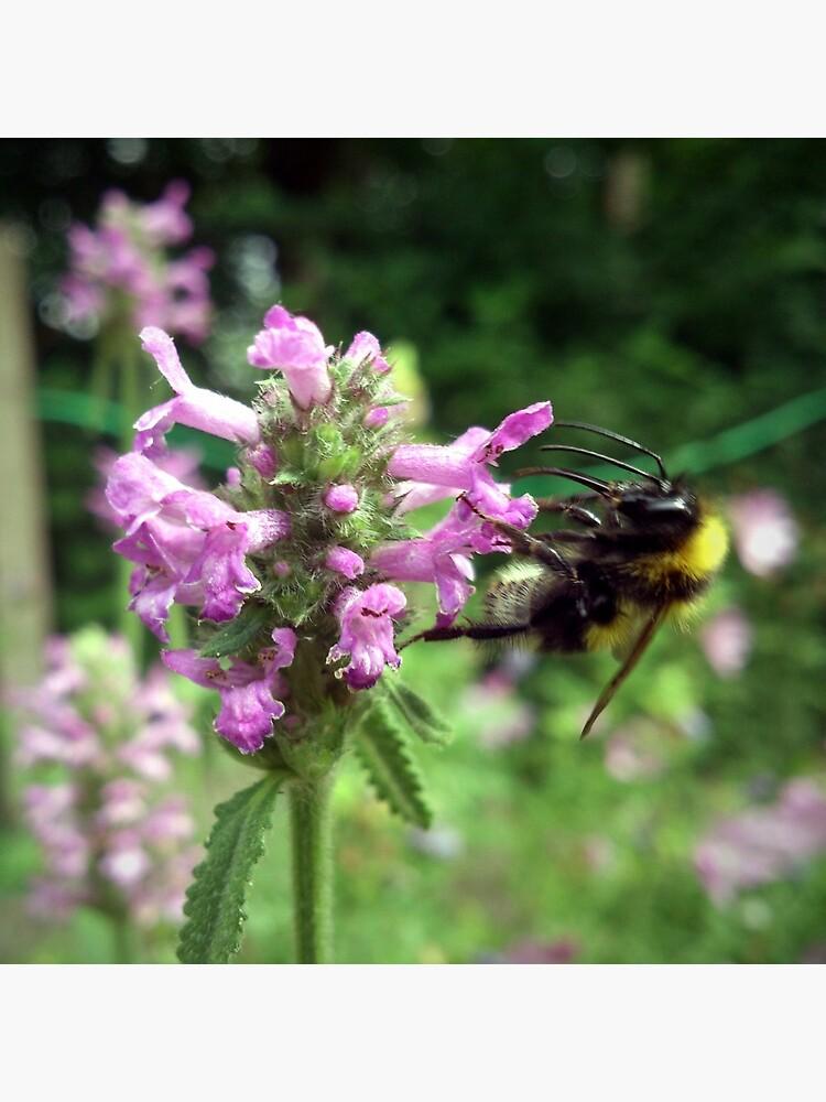Blüte mit Biene von Gourmetkater