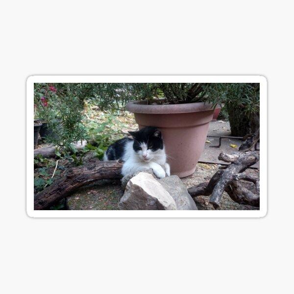 Katze Kitti im Garten Sticker