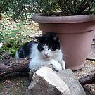Katze Kitti im Garten von Gourmetkater