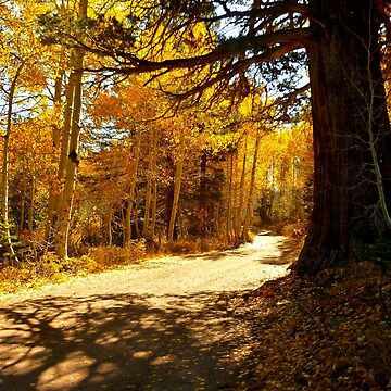 ROAD TO RED LAKE by elainebawden