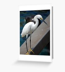 This Is My Roost... Greeting Card