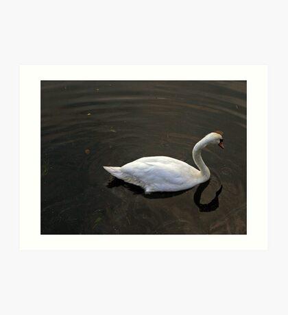 White Swan, Art Print