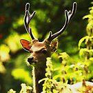 Sika (cervus nippon) stag in velvet by Alan Mattison
