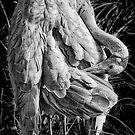 Brolga Crane by Mark Boyle