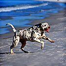 Dog's Life... by scottsphotos