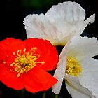 Poppies Three by AnnDixon