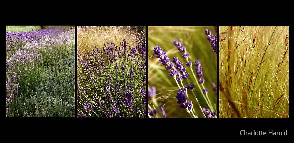 Lavender Stories by Charlotte Harold