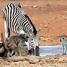 AFRICAN WILDLIFE - SHARE AND SHARE ALIKE ! by Magriet Meintjes