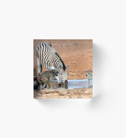 AFRICAN WILDLIFE - SHARE AND SHARE ALIKE ! Acrylic Block