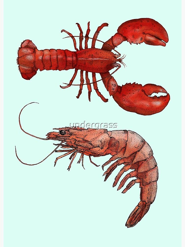 shrimp and lobster | Art Board Print