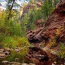 Canyon Trails in Oak Creek Canyon Arizona by K D Graves Photography