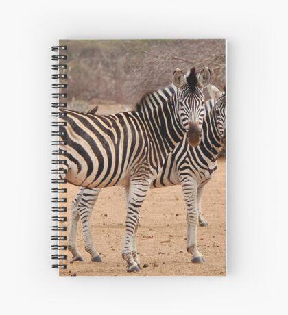 TWO OR THREE ? -  BURCHELL'S ZEBRA – Equus burchelli – Bontkwagga Spiral Notebook