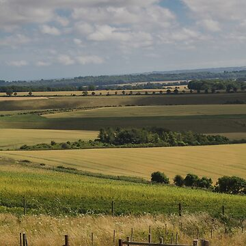 Relaxing in the South Downs, Hampshire, England. UK by heidipics