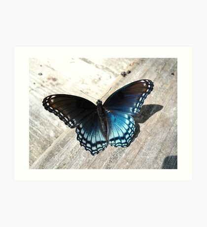 Red-Spotted Purple Butterfly Art Print
