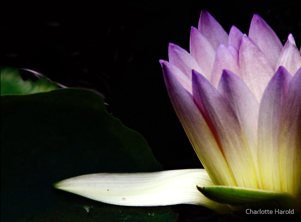 Waterlily Light by Charlotte Harold