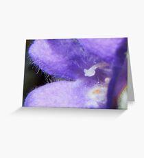 Fuzzy Blue Greeting Card