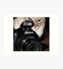 Camera Cat Art Print