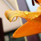 Petal With Raindrops by LumixFZ28