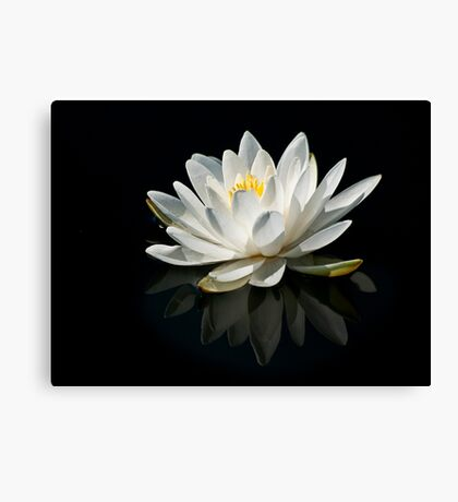 Pure Lily Canvas Print