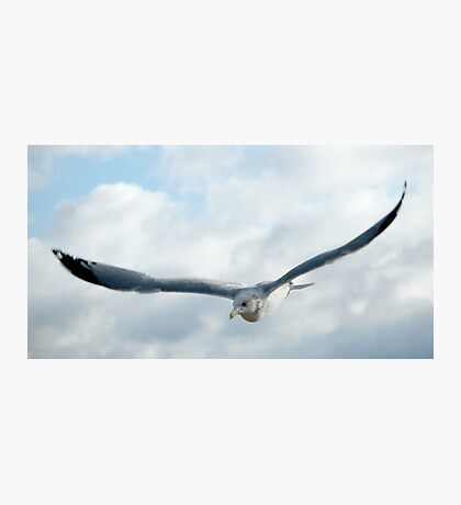Swooping Seagull Photographic Print