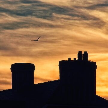 sunset with building and seagull silhouette by franceslewis