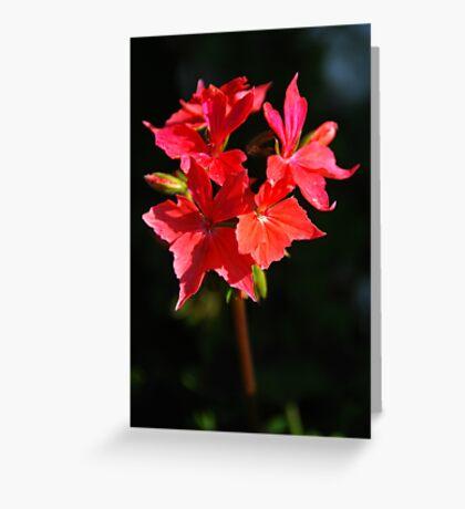 flowerburst Greeting Card