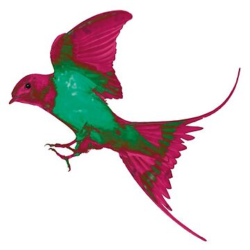 Rainbox Bird by Tessolate