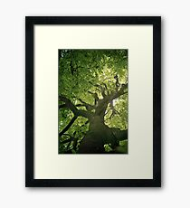 Photosynthesis Framed Print