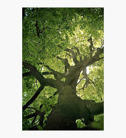 Photosynthesis Photographic Print