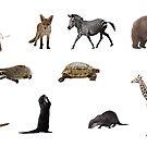 Tiere von clelkin