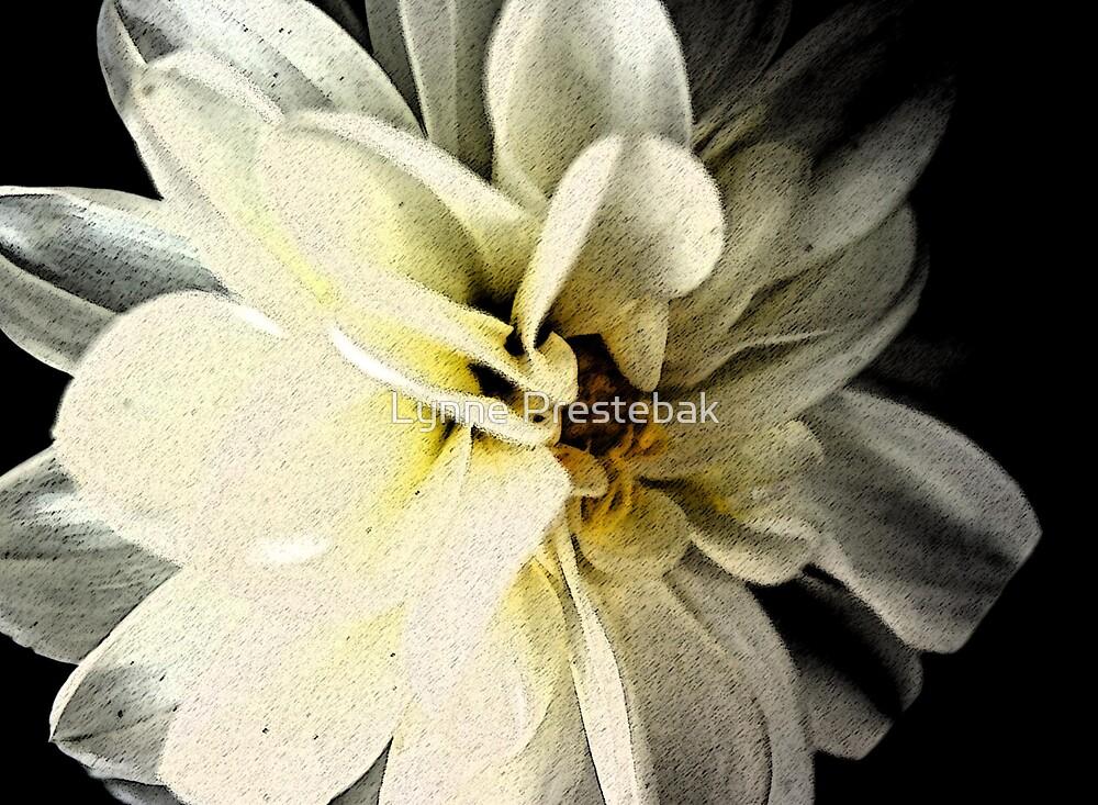 dahlia on black by Lynne Prestebak