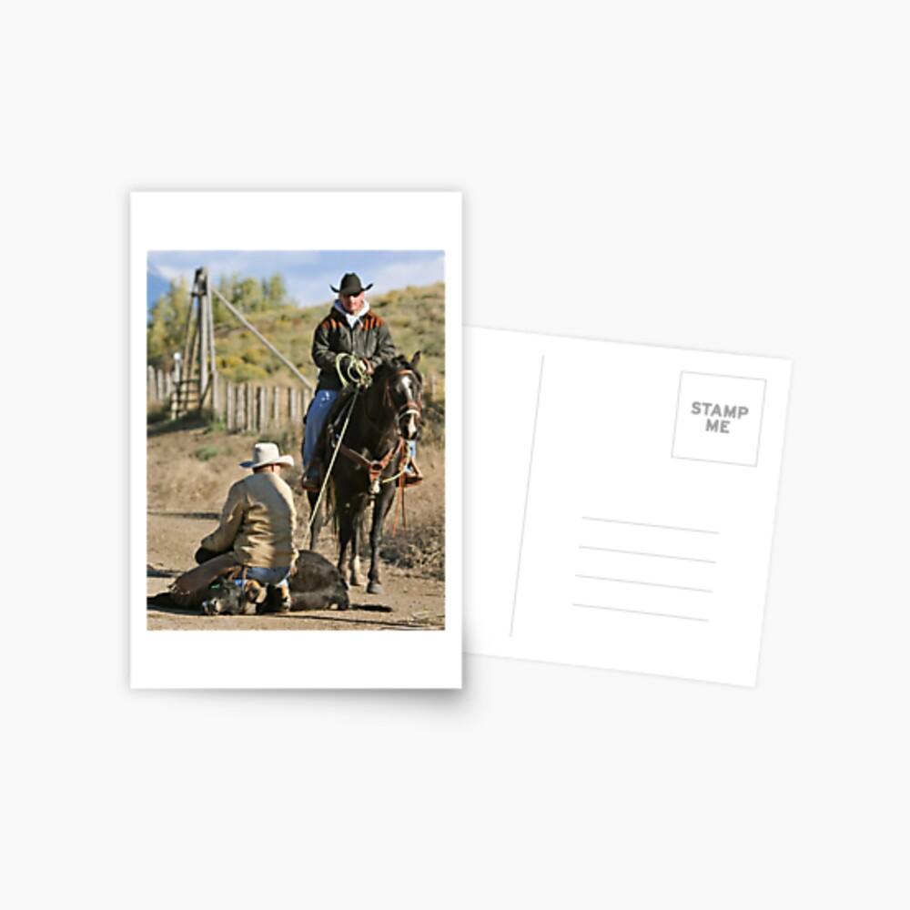 Checking the Calf Postcard