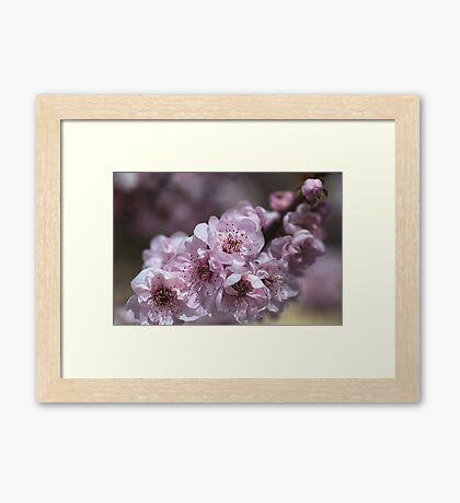 Spring Blossom Makes You Sing Framed Print