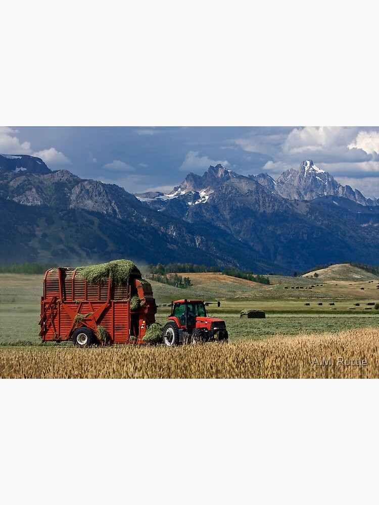 Making Hay, Shadow of the Tetons, Walton Ranch by annruttle