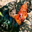 Fowl huddle by mklau