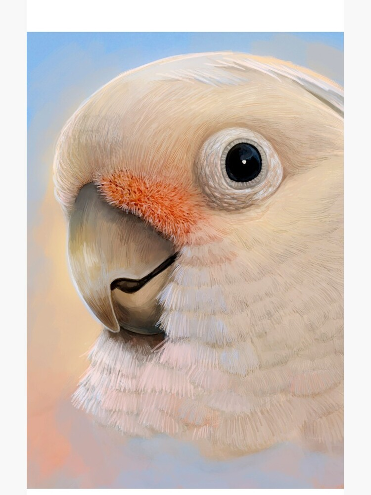 Goffin Tanimbar Corella Cockatoo by lifewithbirds