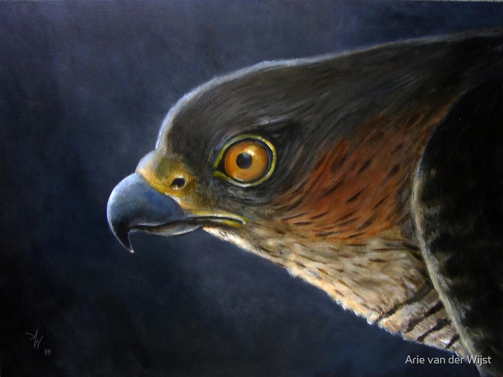Hawk-Eye by Arie van der Wijst