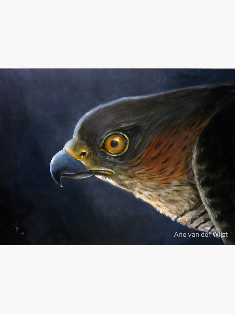 Hawk-Eye by Aart