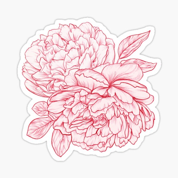 Pink Peonies Sticker