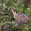 Butterfly print, tiger swallowtail, tiger swallowtail butterfly, yellow butterfly, nature, nature photography by Brandy Watkins