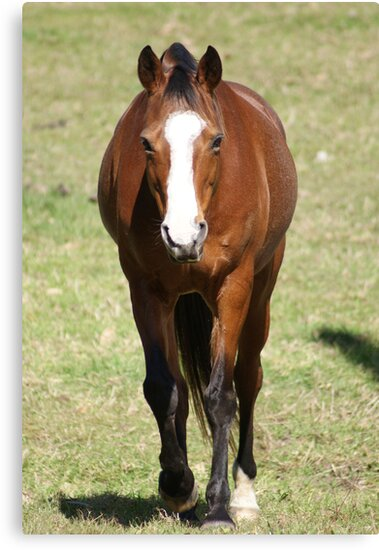 Julies Horse by Rochelle Buckley