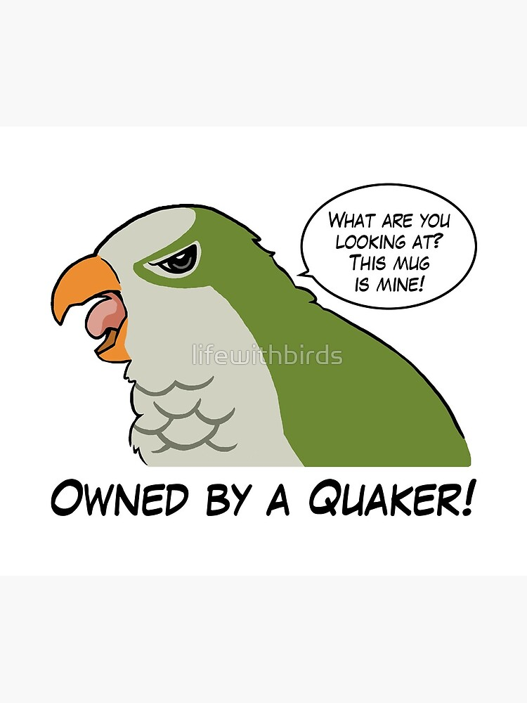 Owned by a green quaker by lifewithbirds
