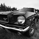 Black and White Mustang by milod21