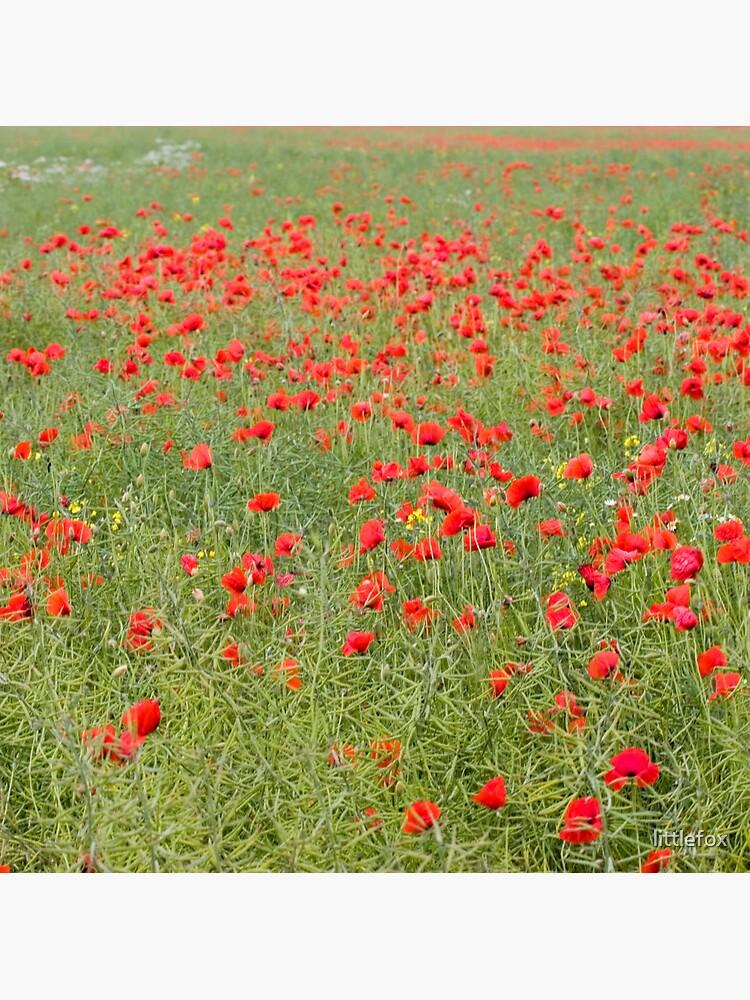 Pretty poppies by littlefox