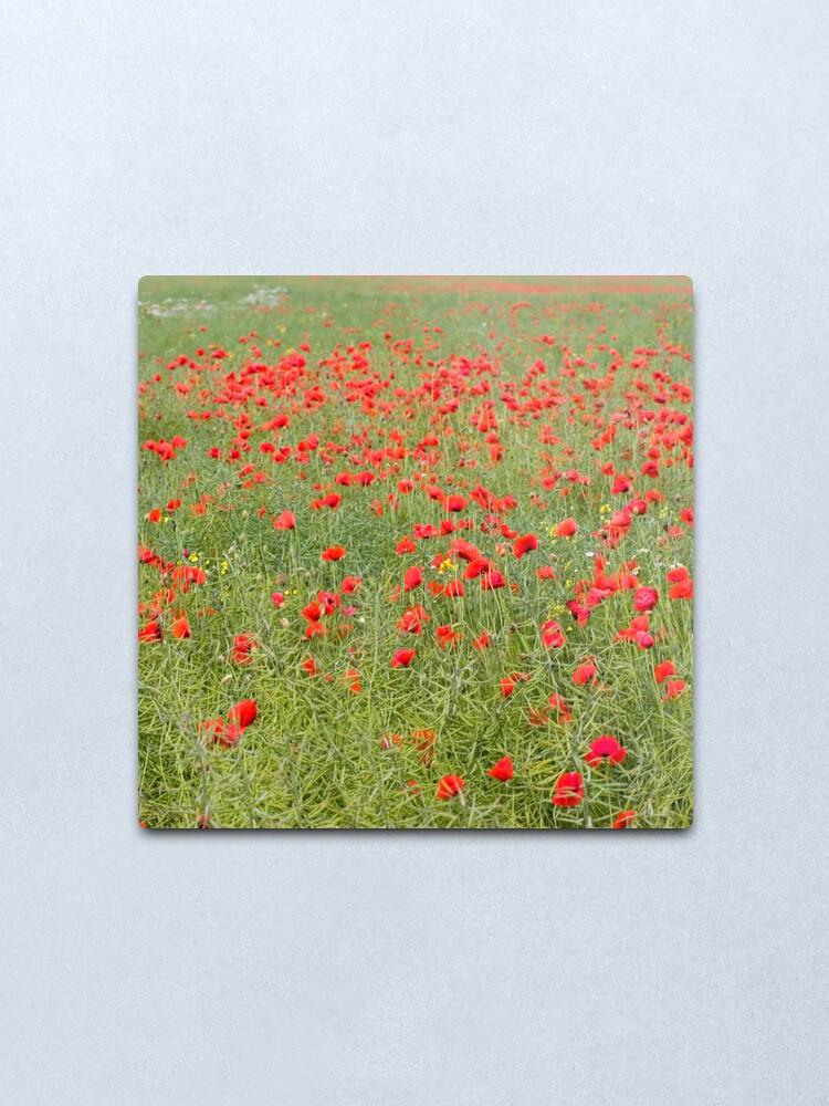 Alternate view of Pretty poppies Metal Print