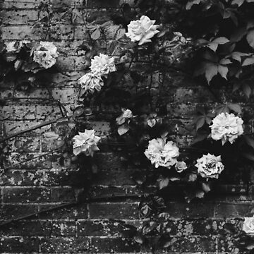 Black Rose by VILLAGESTORE